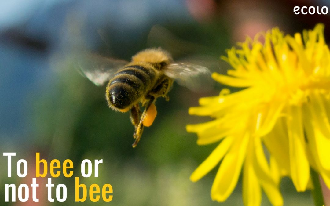 Bee or not to bee